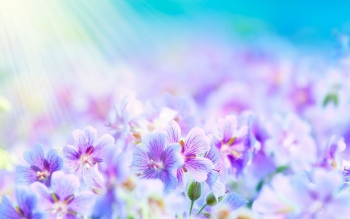 Artistic - Flower Wallpapers and Backgrounds ID : 477541
