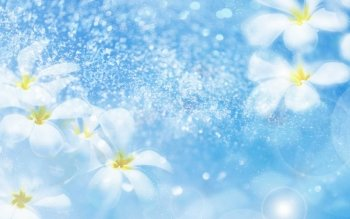 Artistic - Flower Wallpapers and Backgrounds ID : 477542