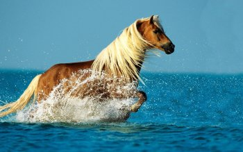 Animalia - Caballo Wallpapers and Backgrounds