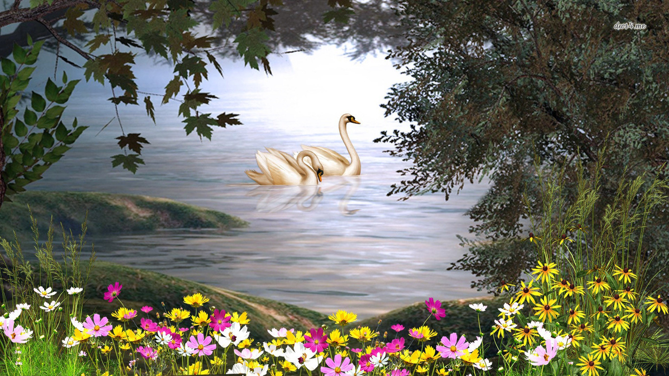 Mute swan wallpaper and background image 1366x768 id - Swan wallpapers for desktop ...