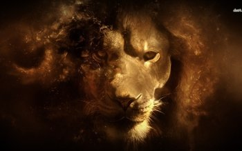 Animal - Lion Wallpapers and Backgrounds ID : 481901