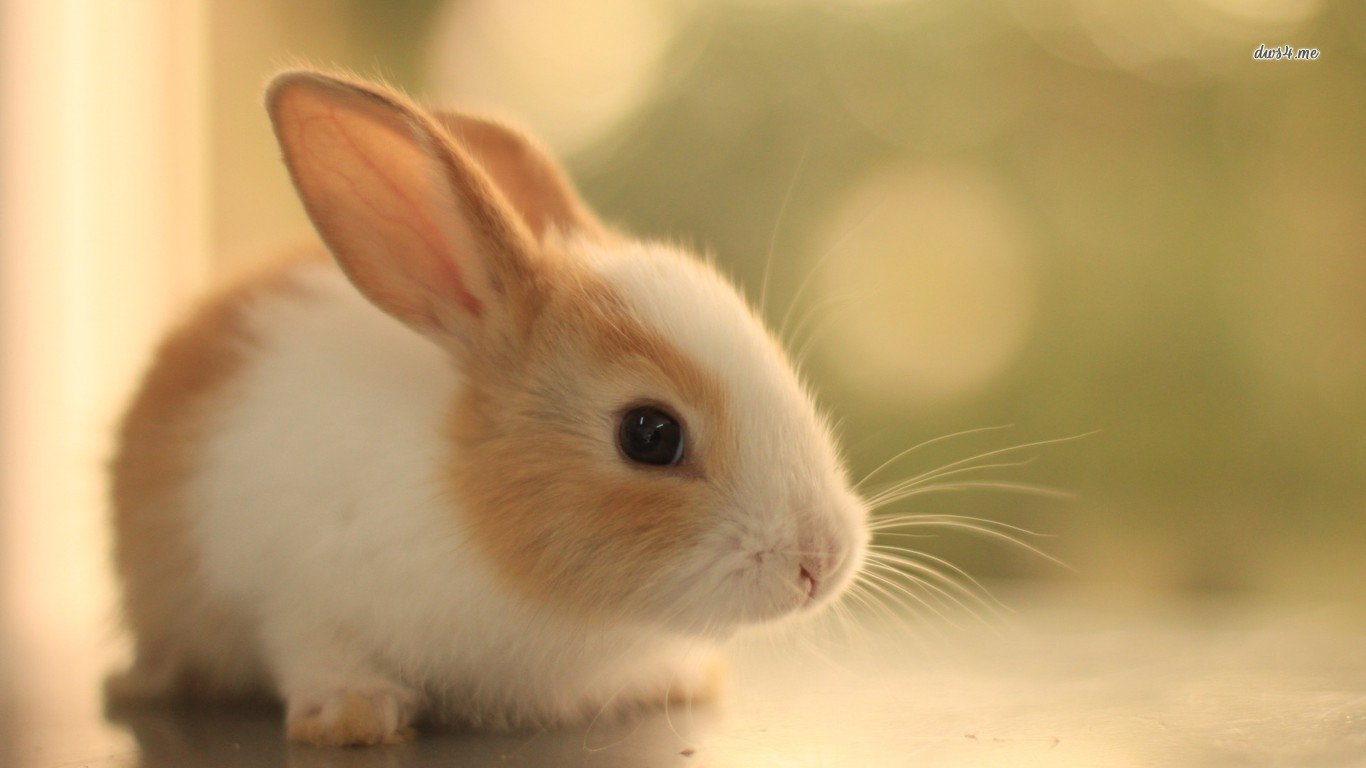 255 Rabbit Hd Wallpapers Background Images Wallpaper Abyss