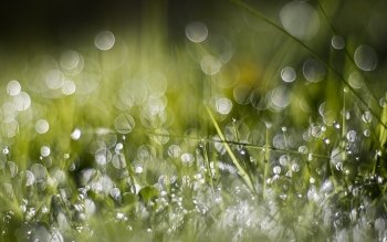 Earth - Grass Wallpapers and Backgrounds ID : 485833