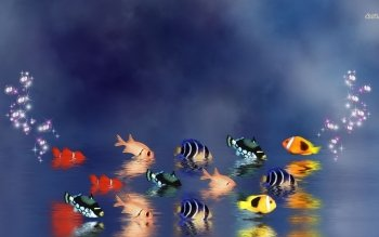 Animal - Fish Wallpapers and Backgrounds ID : 488569