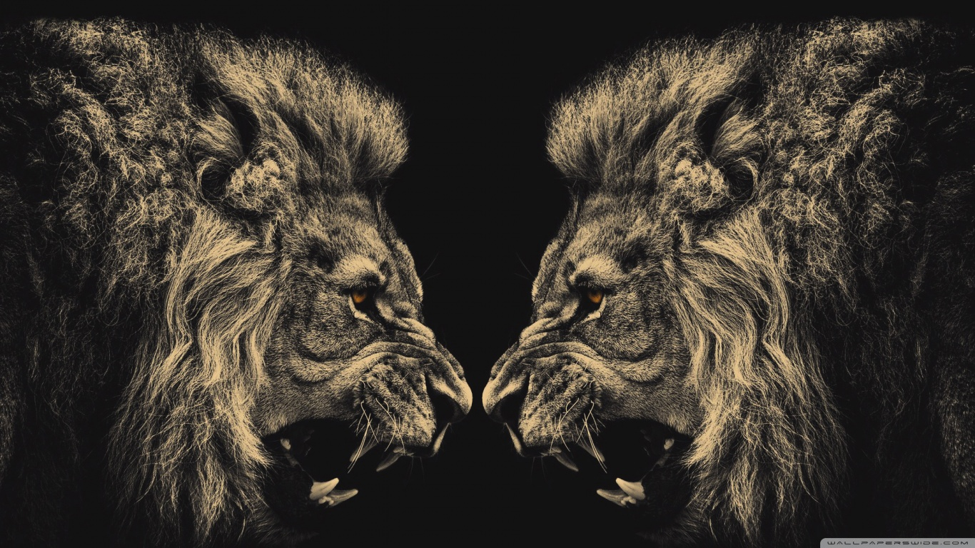 Lion Wallpaper And Background Image 1366x768 Id 494837 Wallpaper Abyss