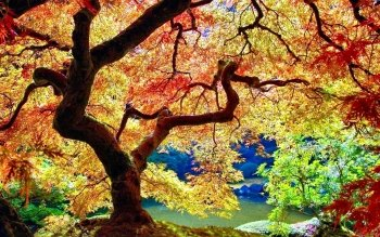 Earth - Tree Wallpapers and Backgrounds ID : 497304