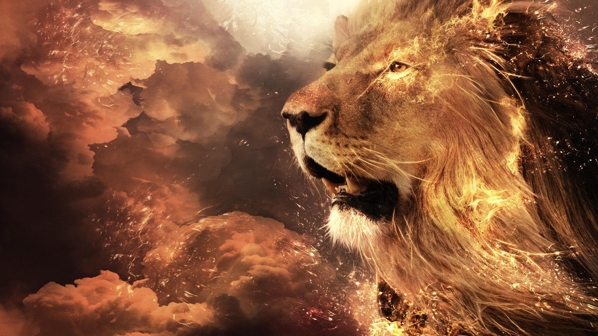 Lion Full Hd Wallpaper And Hintergrund 1920x1080 Id 498189