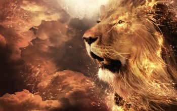 Animal - Lion Wallpapers and Backgrounds ID : 498189