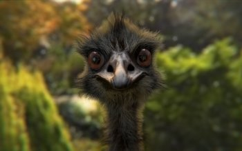 Animal - Emu Wallpapers and Backgrounds ID : 500772