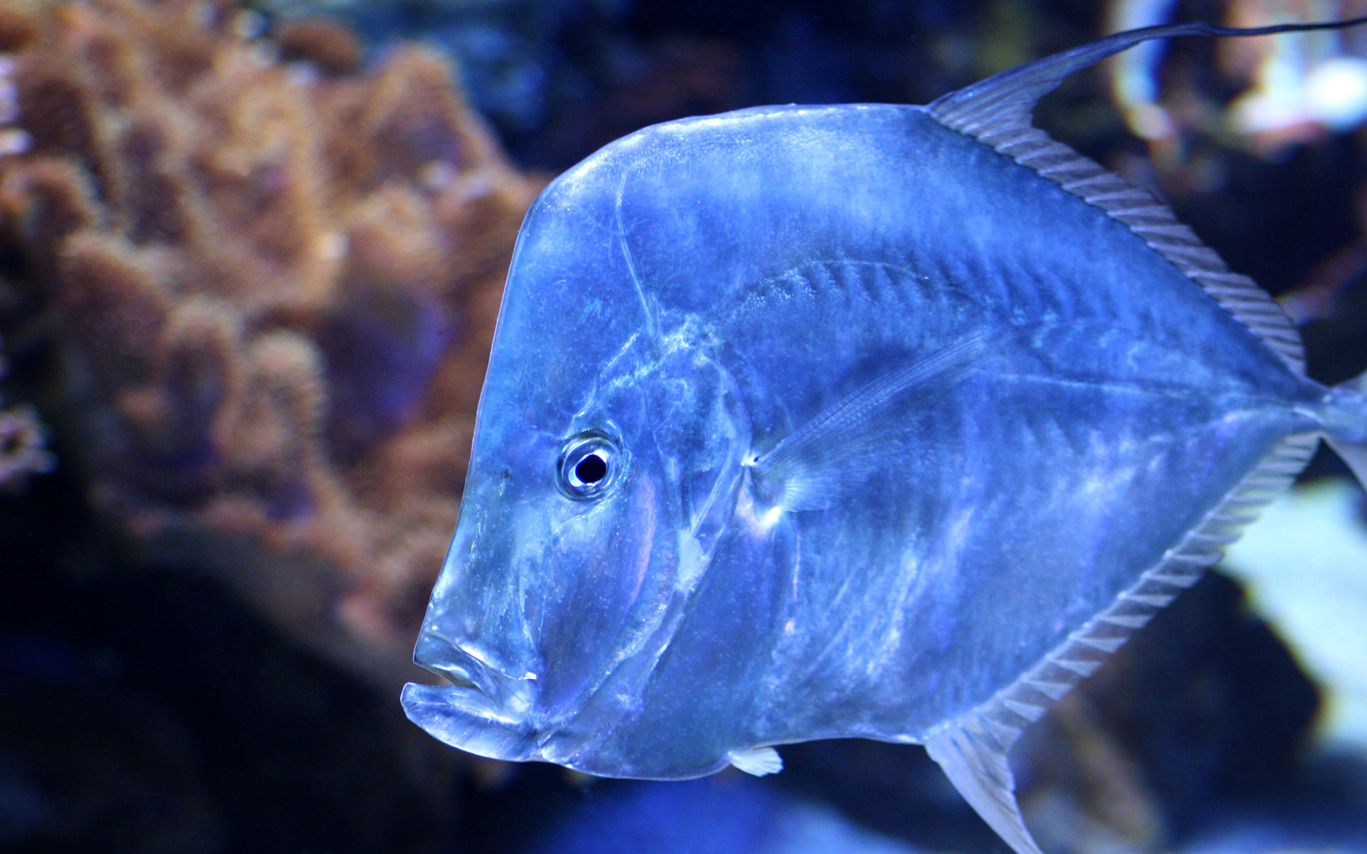 fish marlin desktop 1920x1200 - photo #41