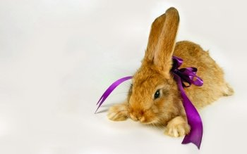 Photography - Bunny Wallpapers and Backgrounds ID : 502142