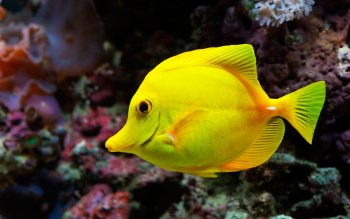 Animal - Fish Wallpapers and Backgrounds ID : 502473