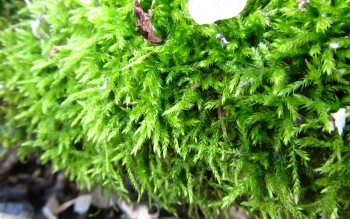 Earth - Moss Wallpapers and Backgrounds ID : 503327