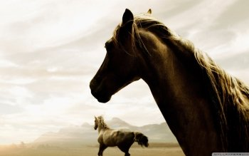 Animal - Horse Wallpapers and Backgrounds ID : 504270