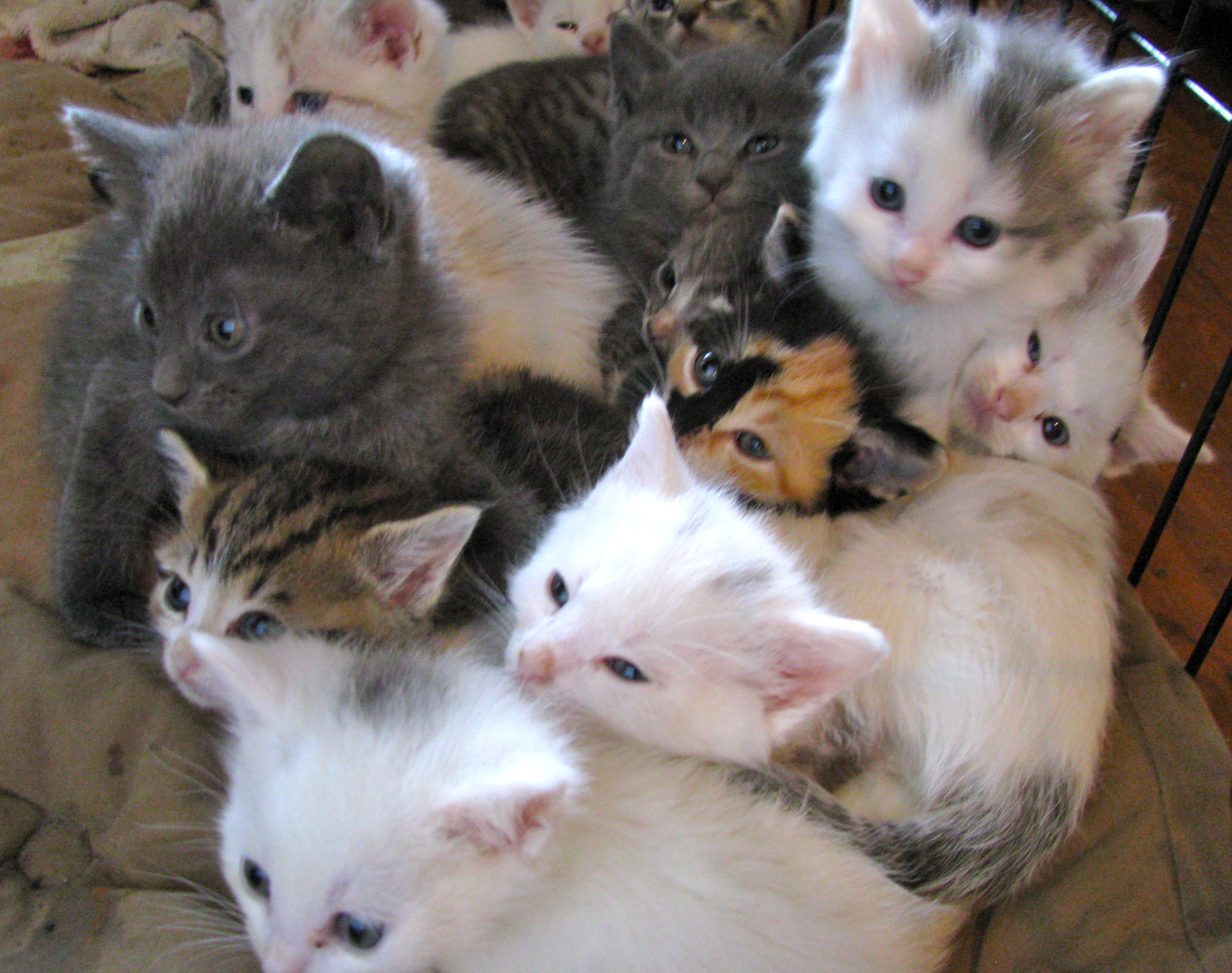 Kitties And Cats Hd Wallpaper Background Image 2462x1944 Id