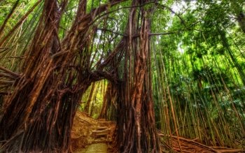 Tierra - Bamboo Wallpapers and Backgrounds ID : 507030