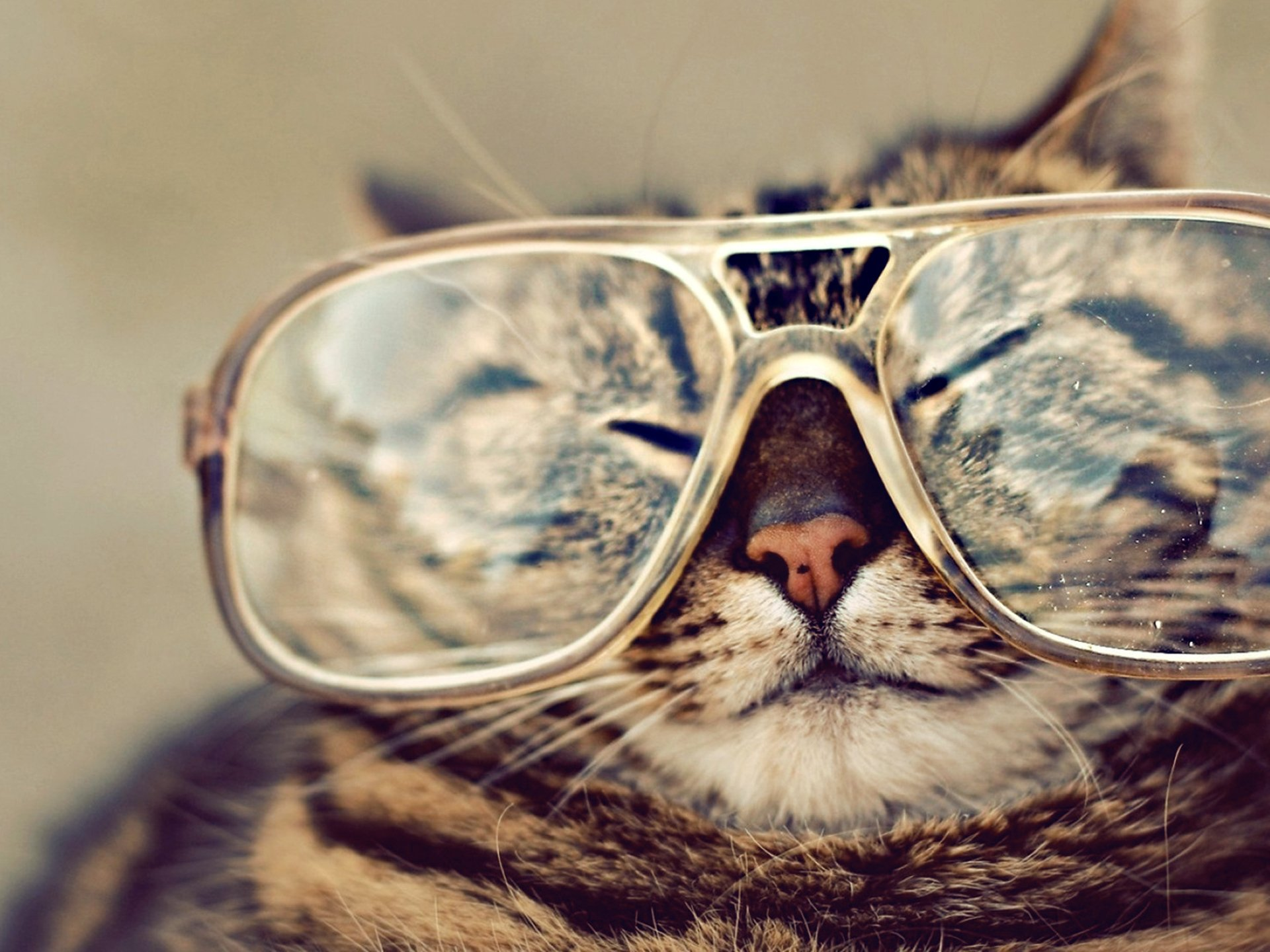 Animal - Cat  Glasses Wallpaper