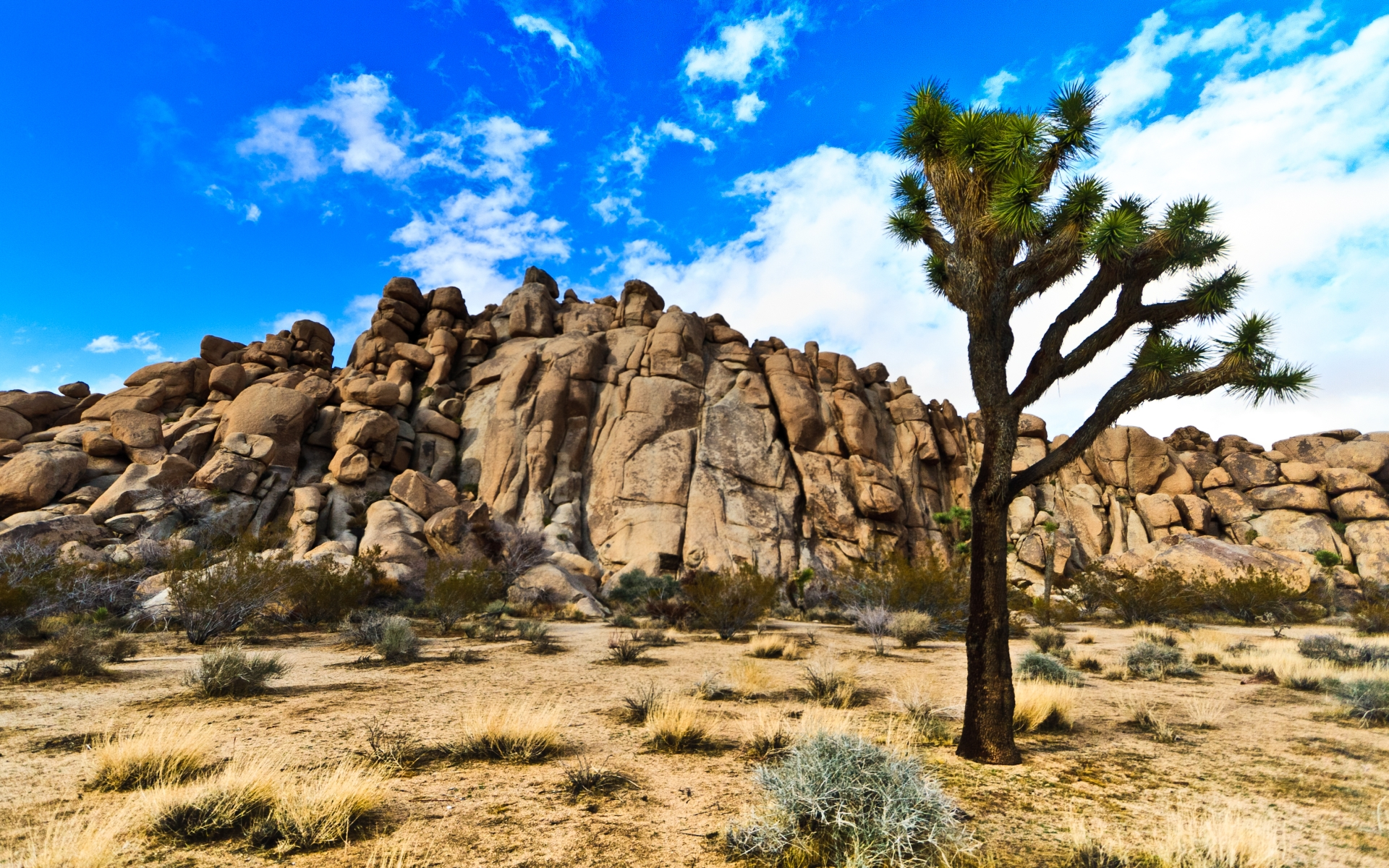 Joshua Tree National Park Hd Wallpaper Background Image 1920x1200 Id 515771 Wallpaper Abyss