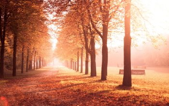 Earth - Autumn Wallpapers and Backgrounds ID : 524410