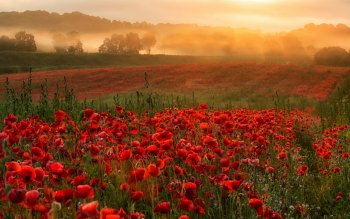 Earth - Poppy Wallpapers and Backgrounds ID : 527168