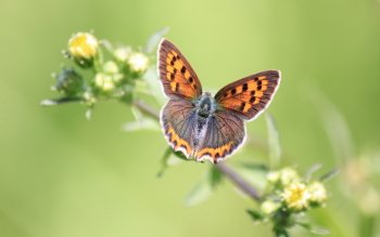 Animal - Butterfly Wallpapers and Backgrounds ID : 528324