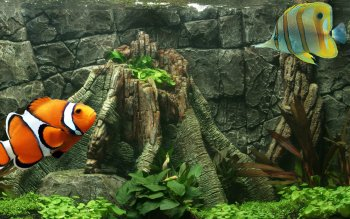 Animal - Fish Wallpapers and Backgrounds ID : 528578