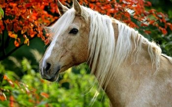 Animal - Horse Wallpapers and Backgrounds ID : 530248