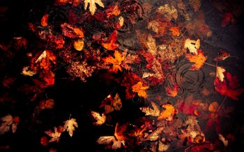 Earth - Autumn Wallpapers and Backgrounds ID : 530695