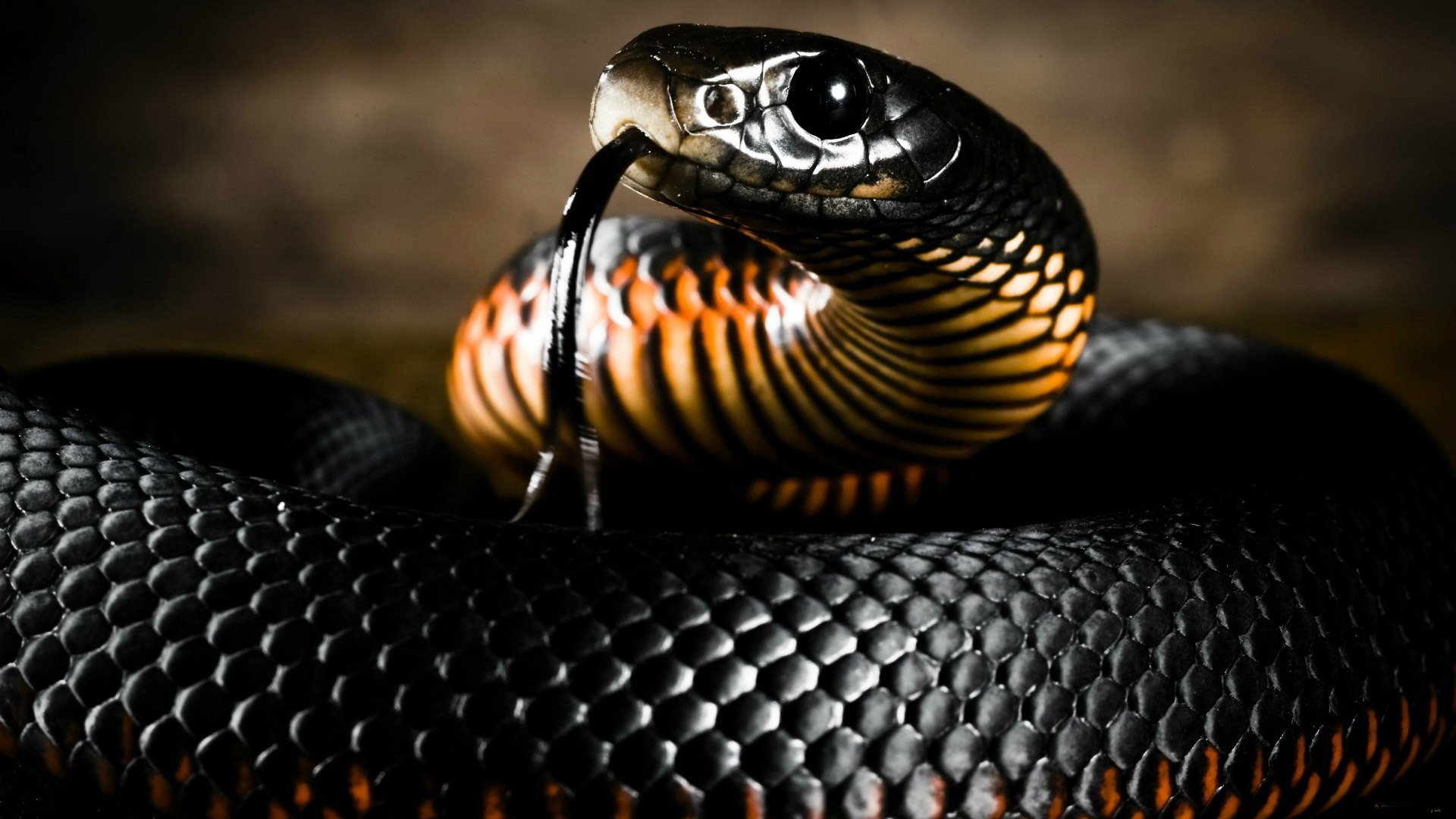 309 Snake HD Wallpapers