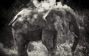 Animalia - Elephant Wallpapers and Backgrounds ID : 533612