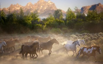 Animal - Horse Wallpapers and Backgrounds ID : 535316