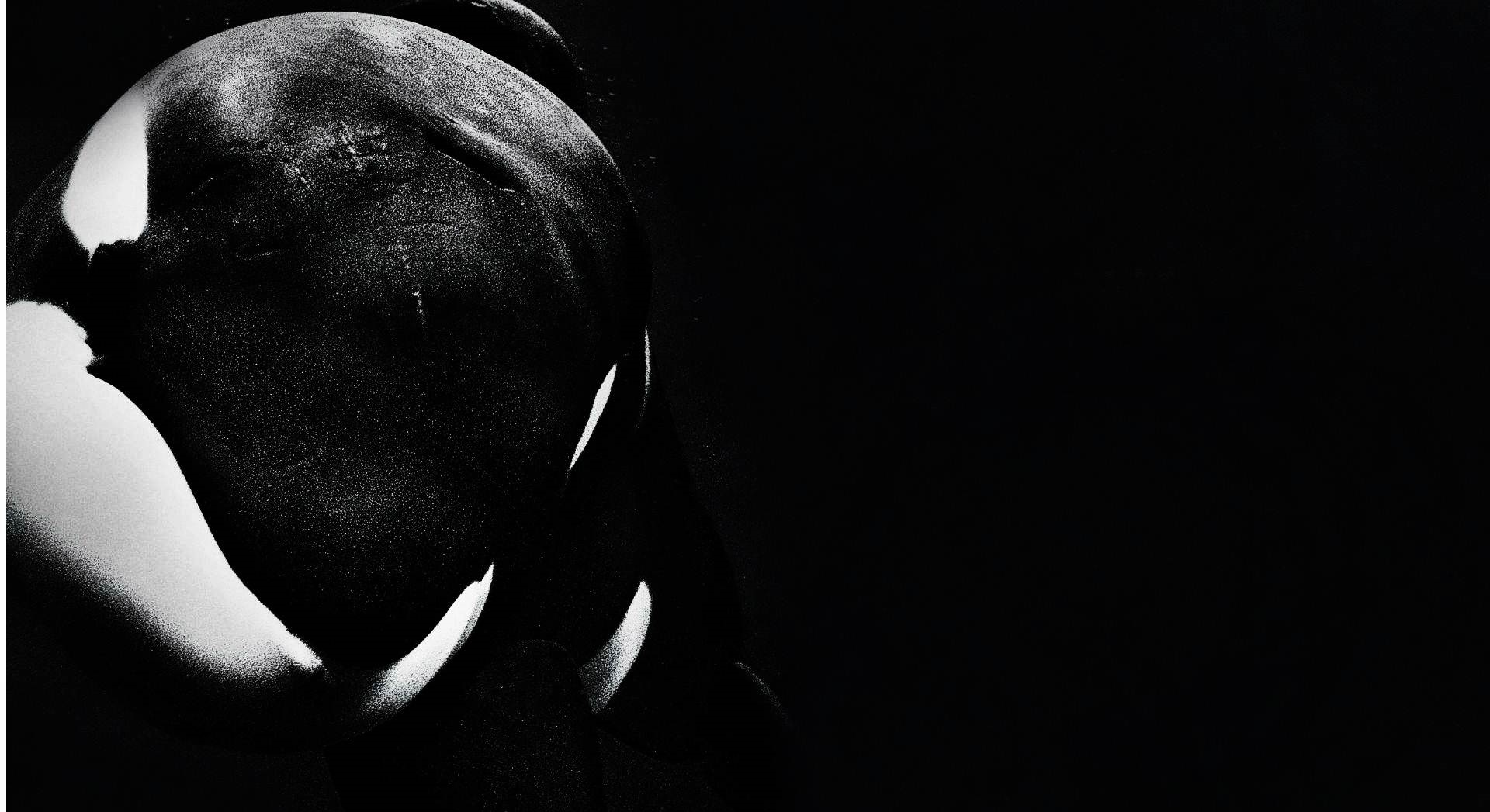 dolphin hd wallpapers for desktop
