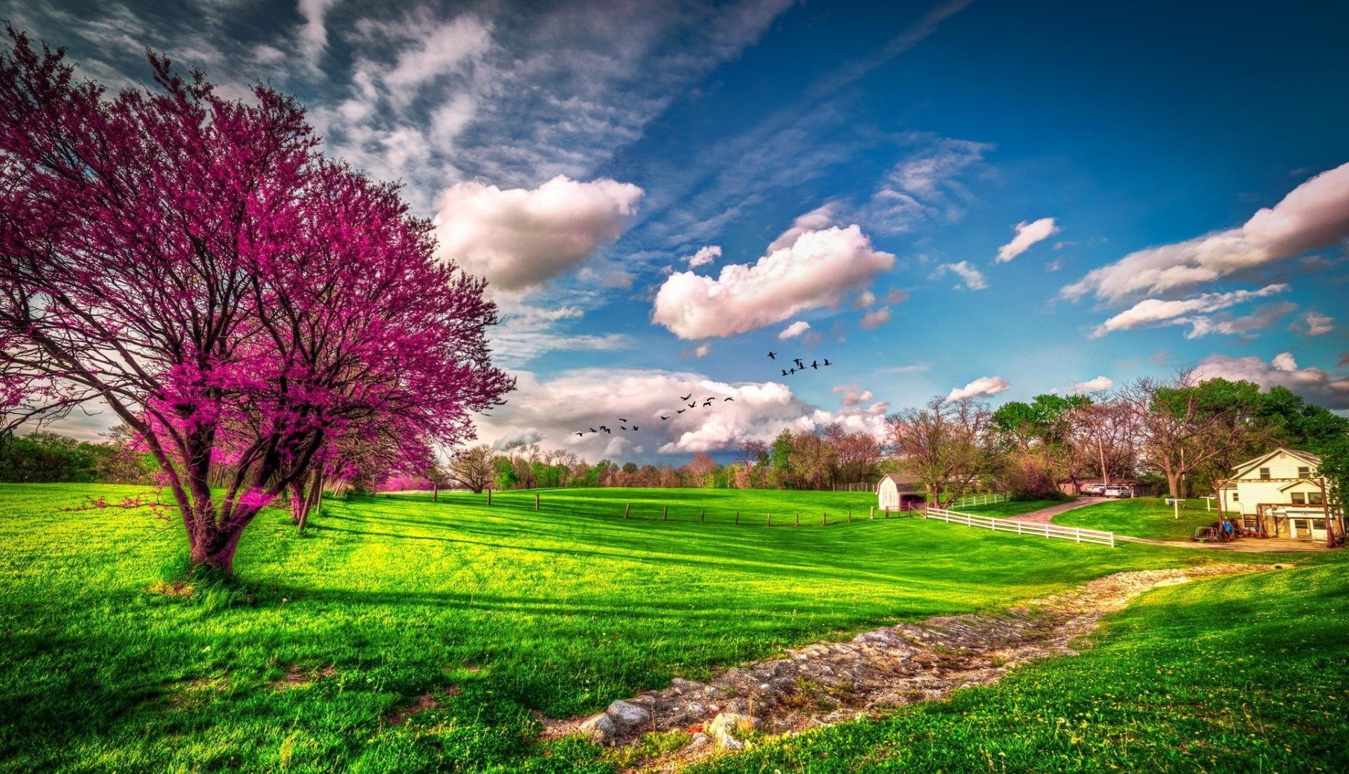 Earth - Spring  Tree Blossom Sky Cloud House Wallpaper
