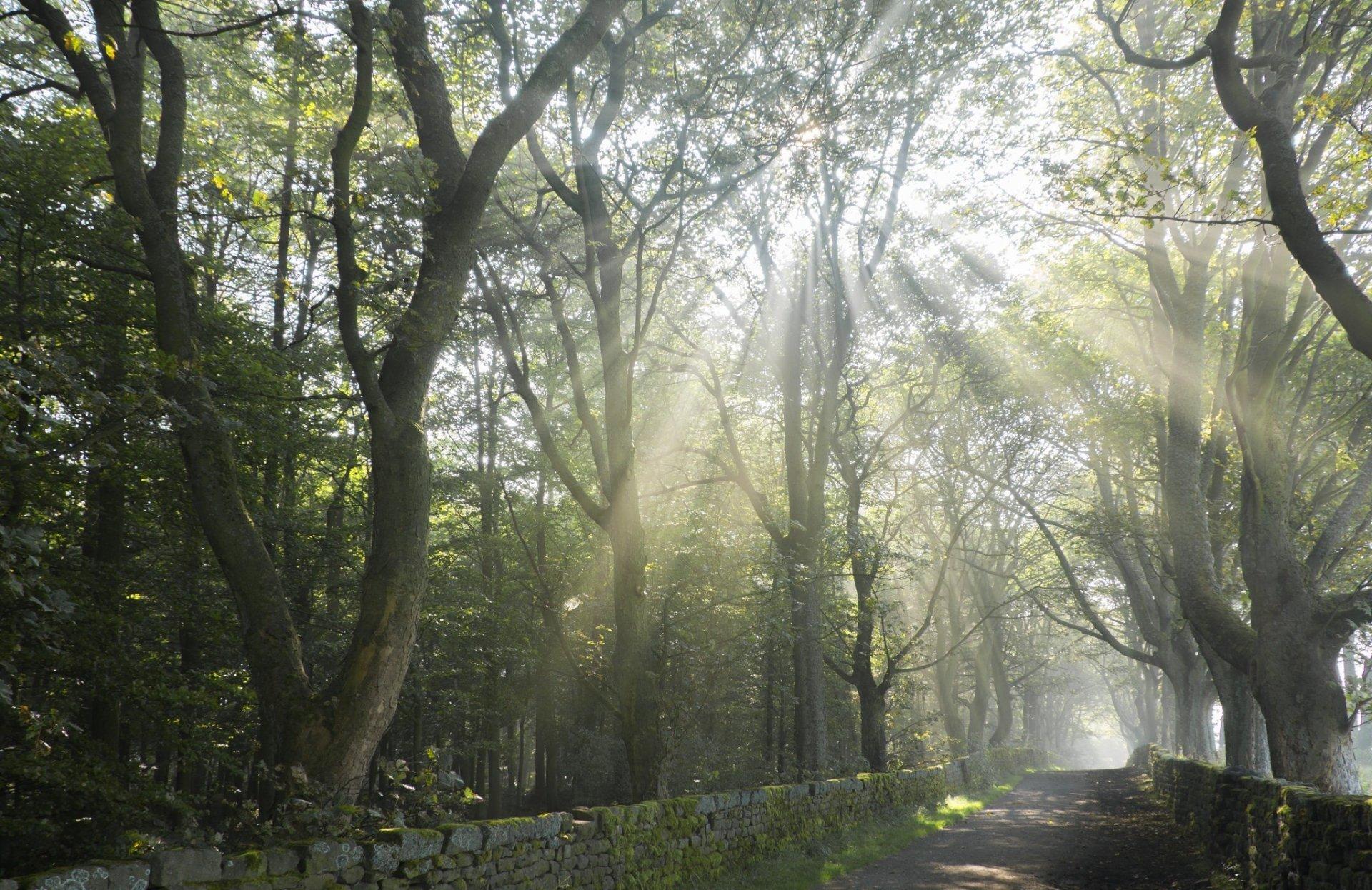 Man Made - Path  Tree Sunbeam Sunshine Summer Wallpaper