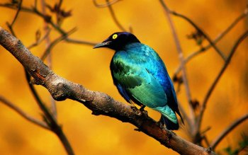 Animal - Bird Wallpapers and Backgrounds ID : 54503
