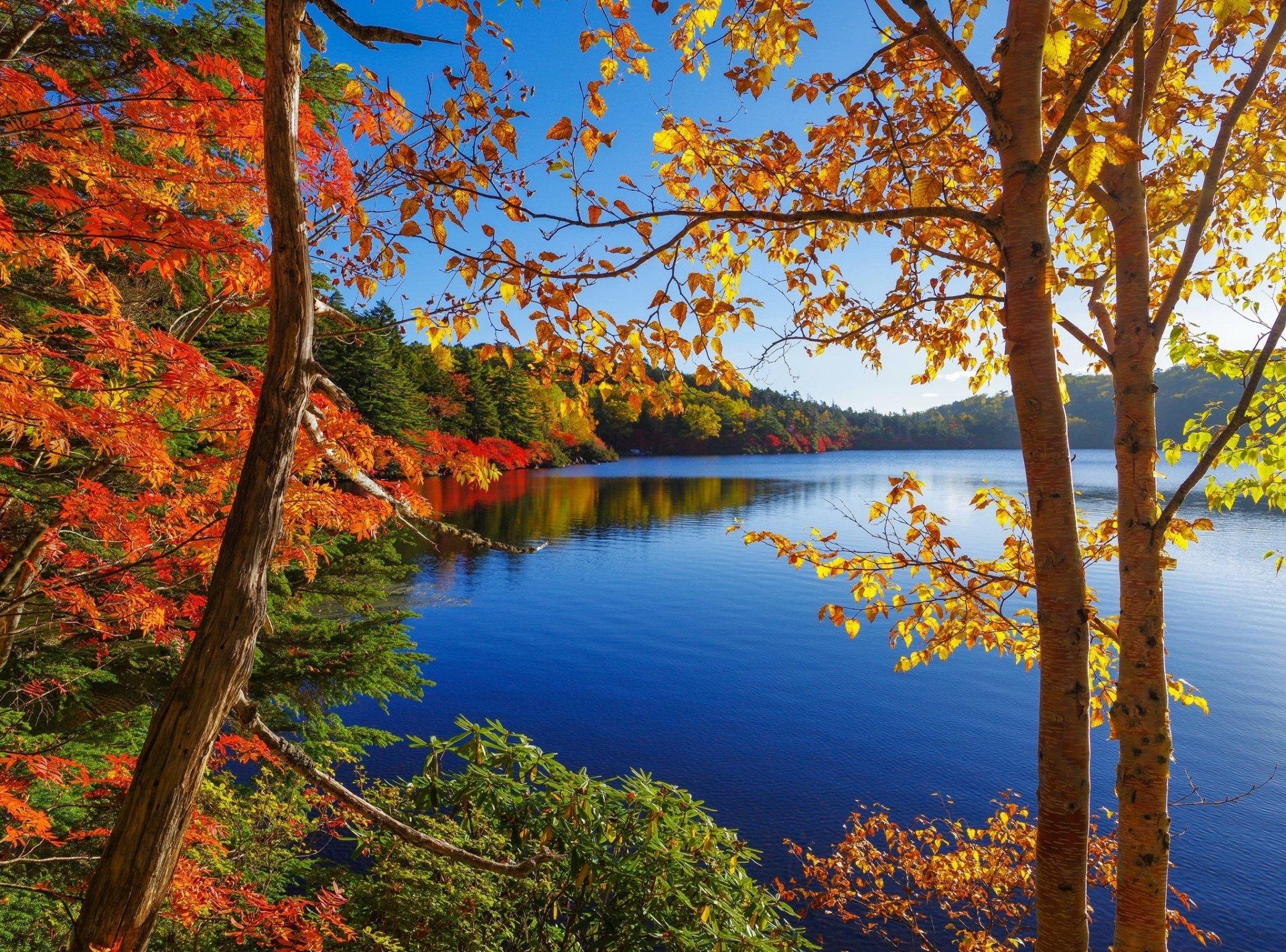 Earth - Fall  Tree Foliage Lake Wallpaper