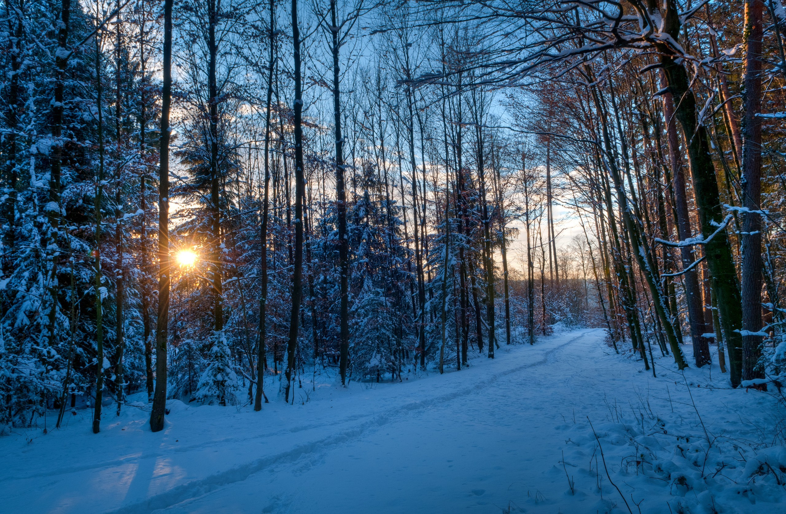 Winter full hd wallpaper and background image 2560x1674 - Wallpaper hd nature winter ...