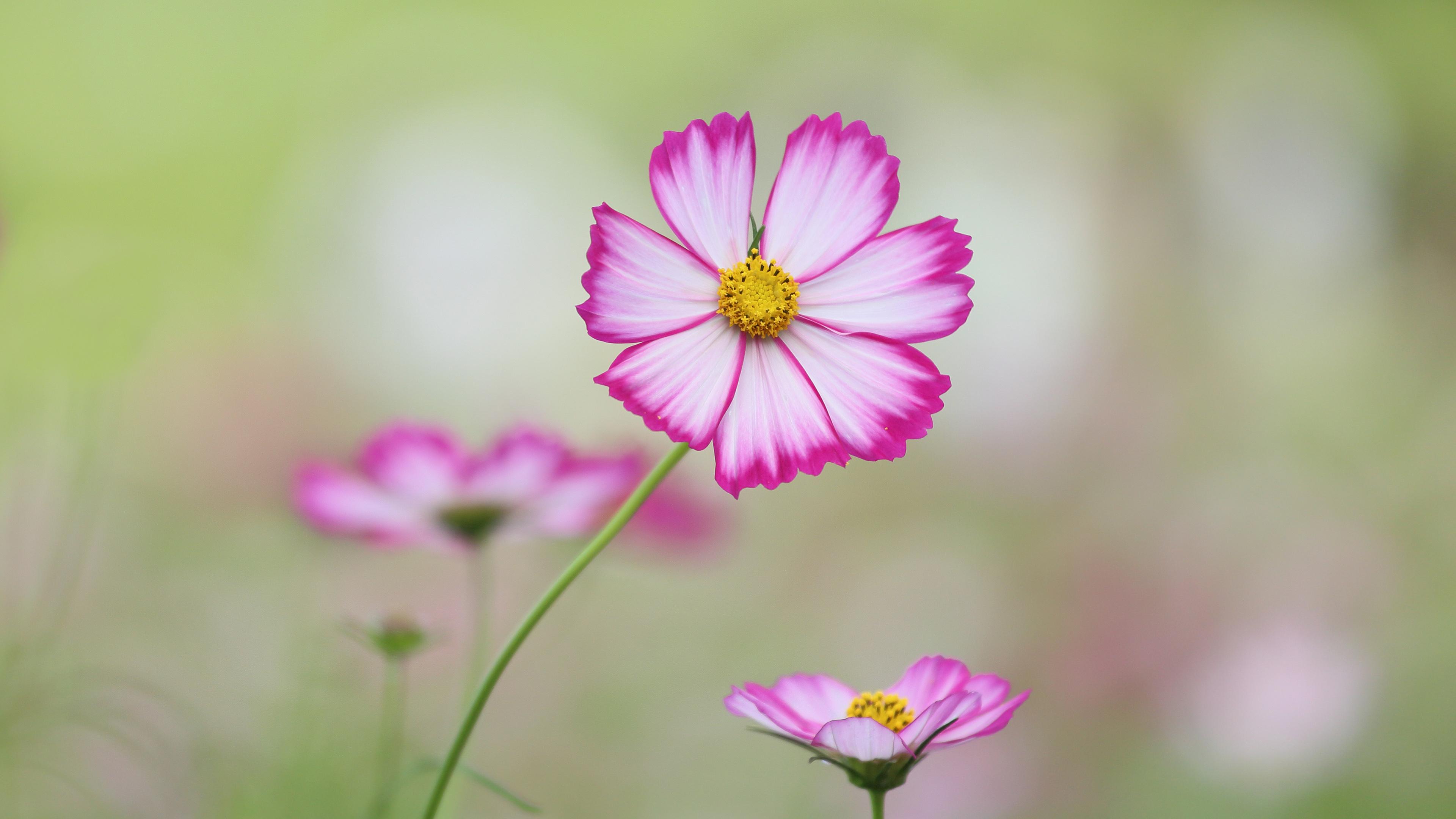 Flower 4k ultra hd wallpaper background image 3840x2160 id wallpapers id568606 download next wallpaper mightylinksfo
