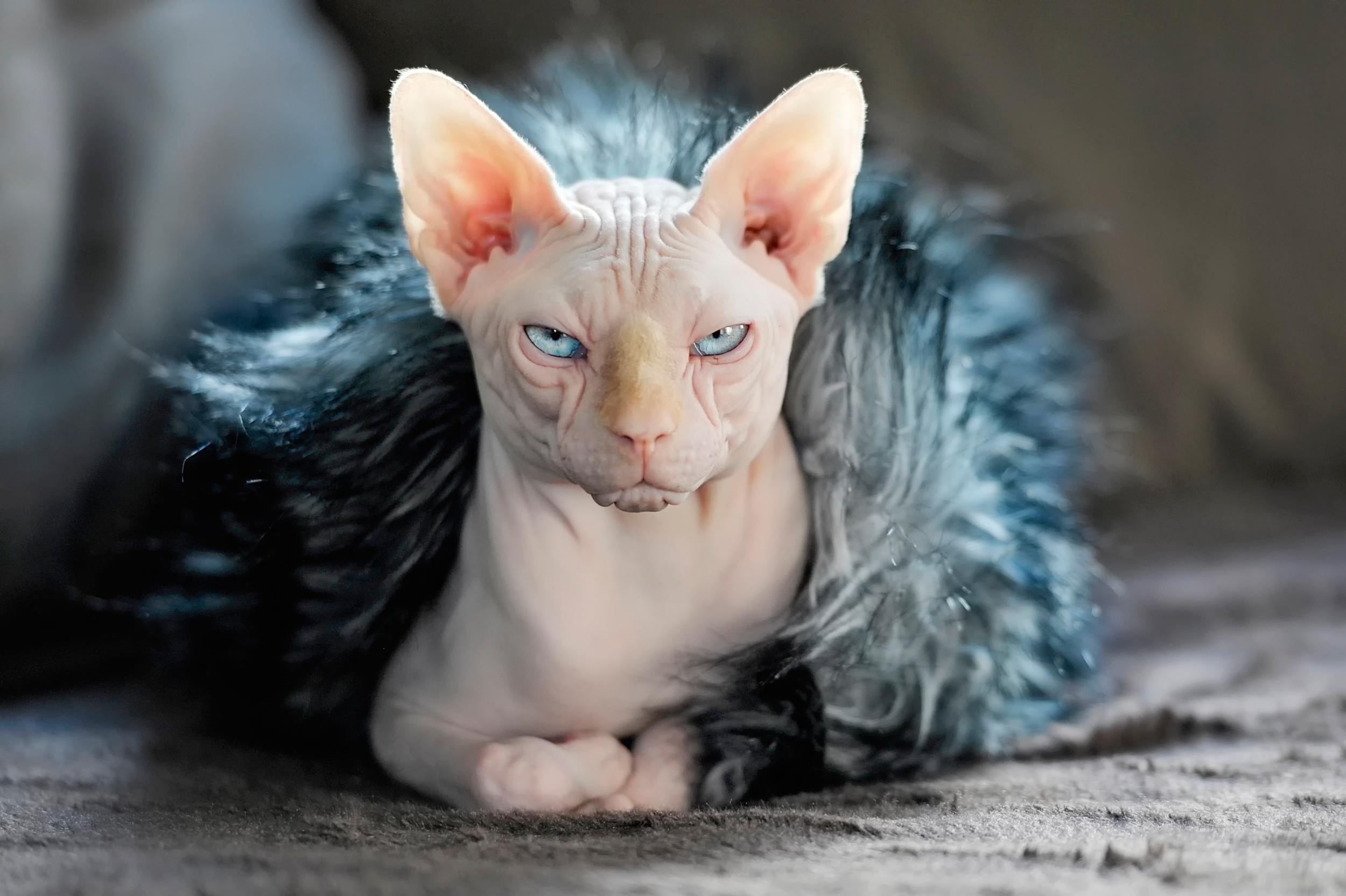 What Are Sphynx Cats Like