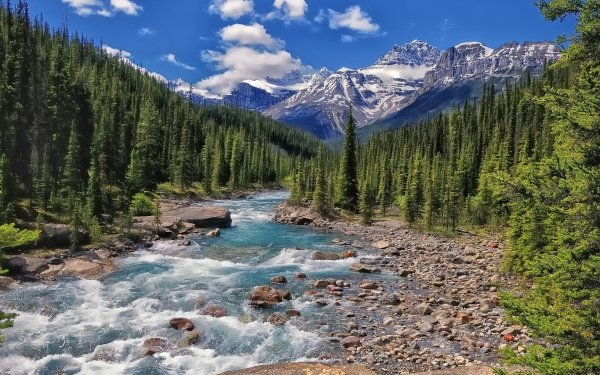 Earth River Mistaya River Canada Alberta Banff Banff National Park Forest Mountain HD Wallpaper | Background Image