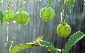 74 Tree Frog Hd Wallpapers Background Images Wallpaper Abyss