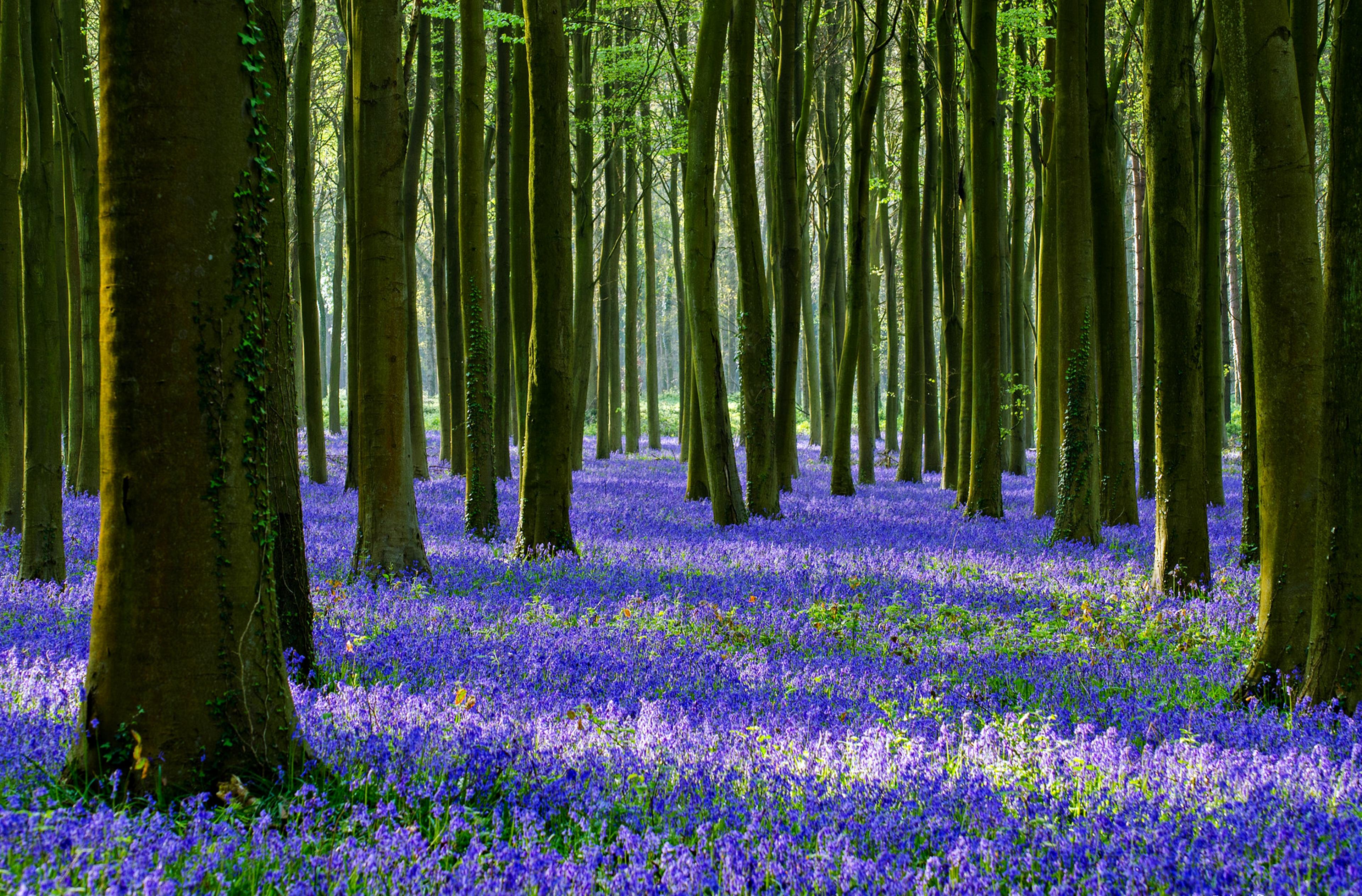 森林 4k Ultra 高清壁纸 桌面背景 3840x2526 Id 598319