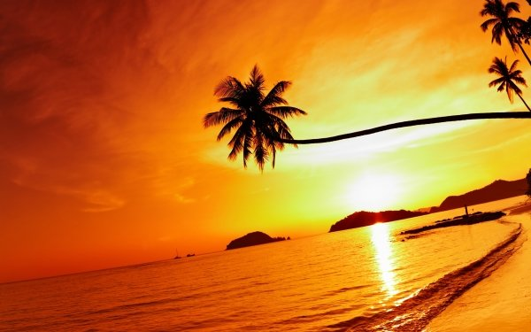 Earth Sunset Beach Thailand Palm Tree Sky Sea HD Wallpaper | Background Image