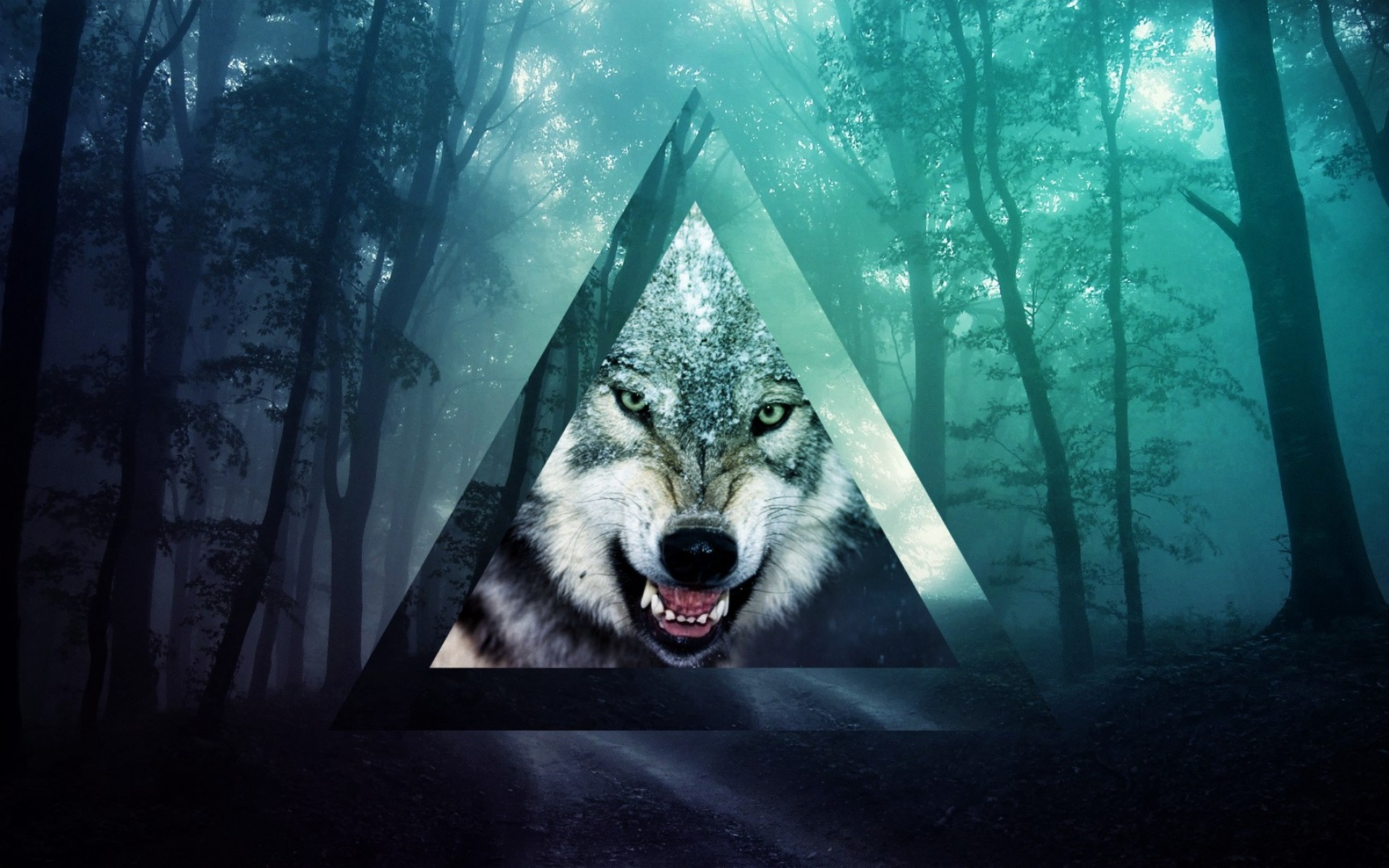 Wolf Full HD Wallpaper And Background Image