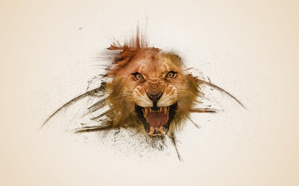 Animal Lion Cats HD Wallpaper   Background Image