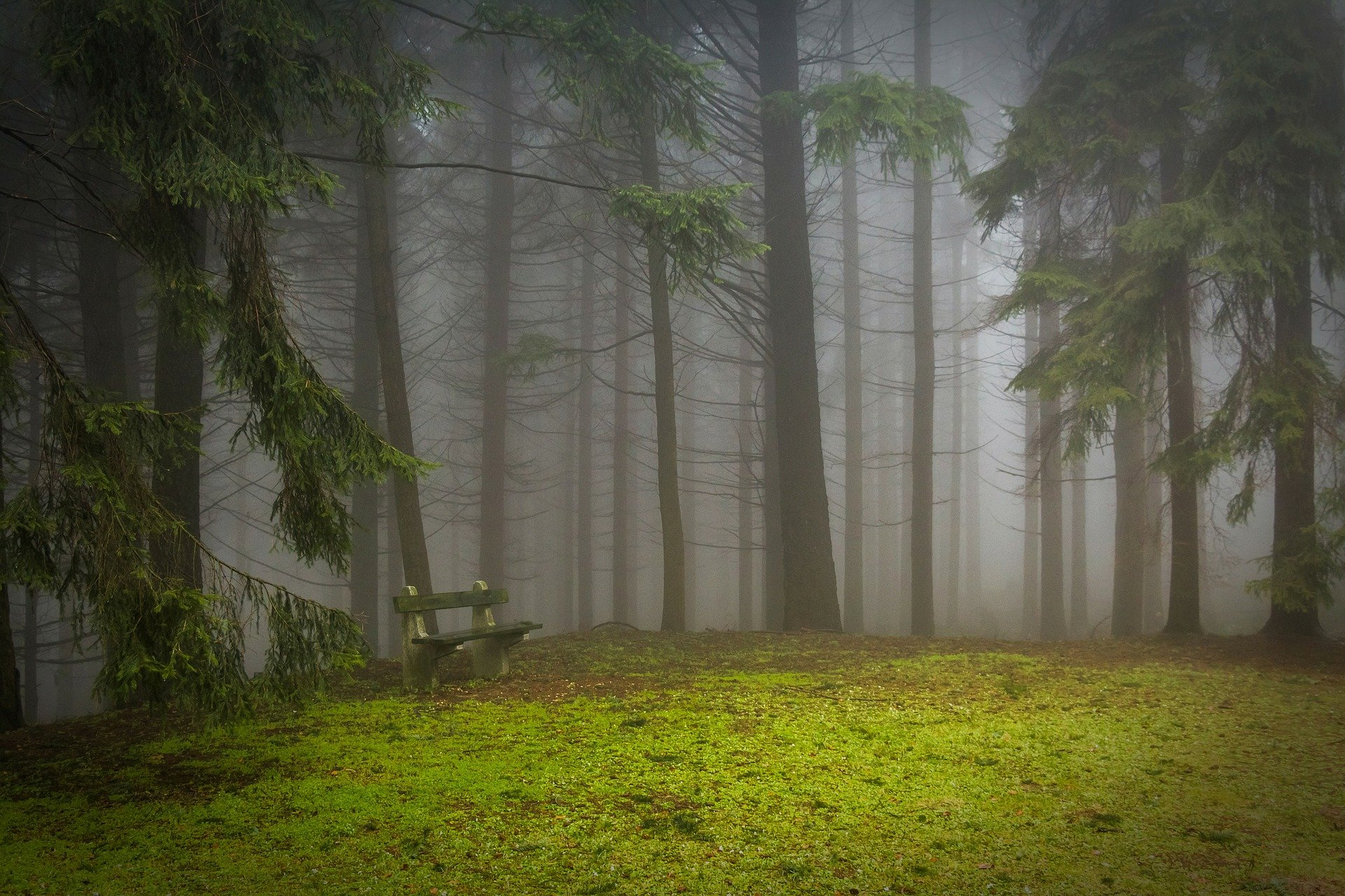 peaceful forrest hd wallpaper background image 1920x1280 id