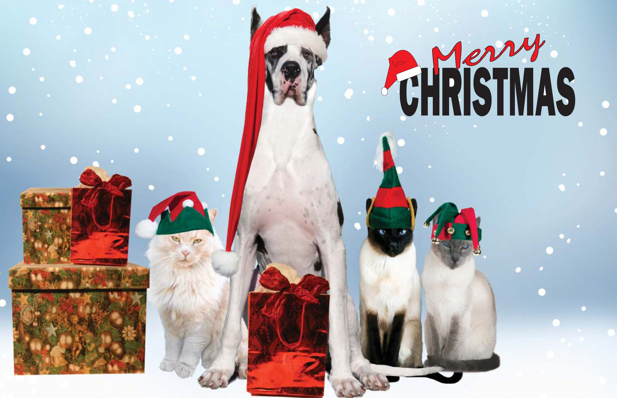 Merry Christmas Animals.Merry Christmas From Paw Of Us Hd Wallpaper Background Image