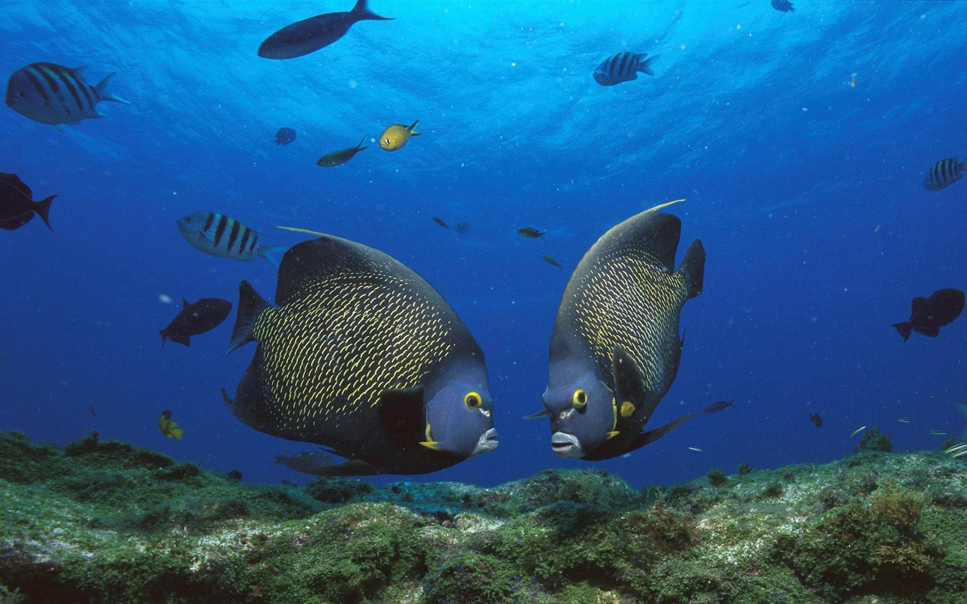 fish marlin desktop 1920x1200 - photo #30