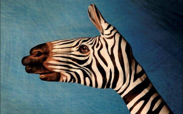 Animal Artistic Zebra Paint HD Wallpaper   Background Image