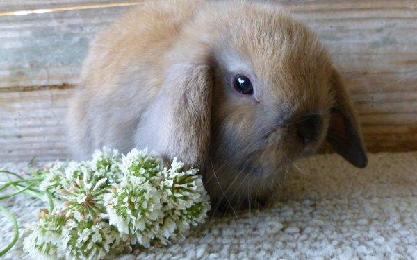 Animal Rabbit HD Wallpaper   Background Image